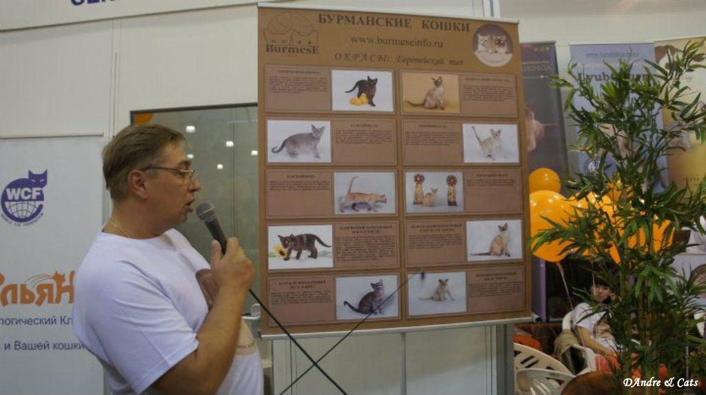 Москва xiii международный фестиваль кошек экспокот-2011 fife, cfa, wcf, wca, tica, asc